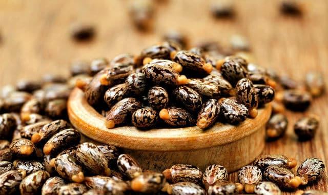 גרגירים של שמן קיק גמייקני שחור