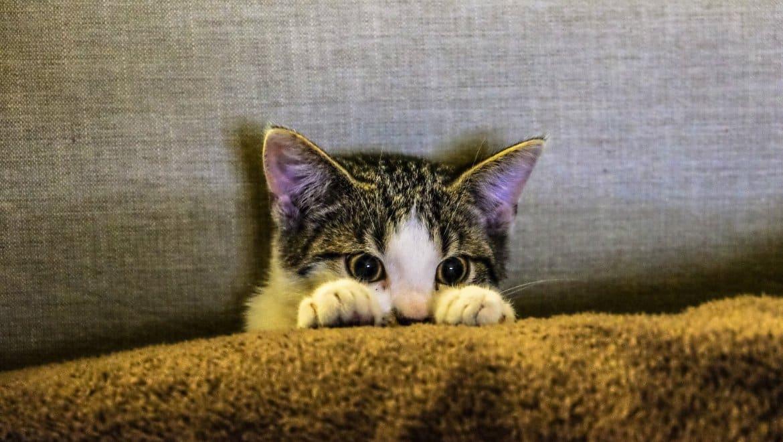 חתול שמפחד מגברים עם זקן
